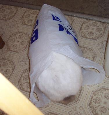rabbitinabag.jpg